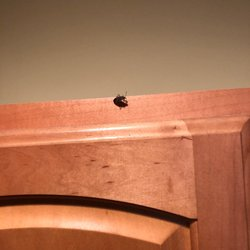Photo Of Minerals Resort Spa Vernon Nj United States Bug On