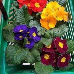 schl ter g rtnerei floristik 66 photos gardeners. Black Bedroom Furniture Sets. Home Design Ideas