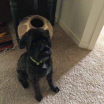 Dog Grooming Littleton