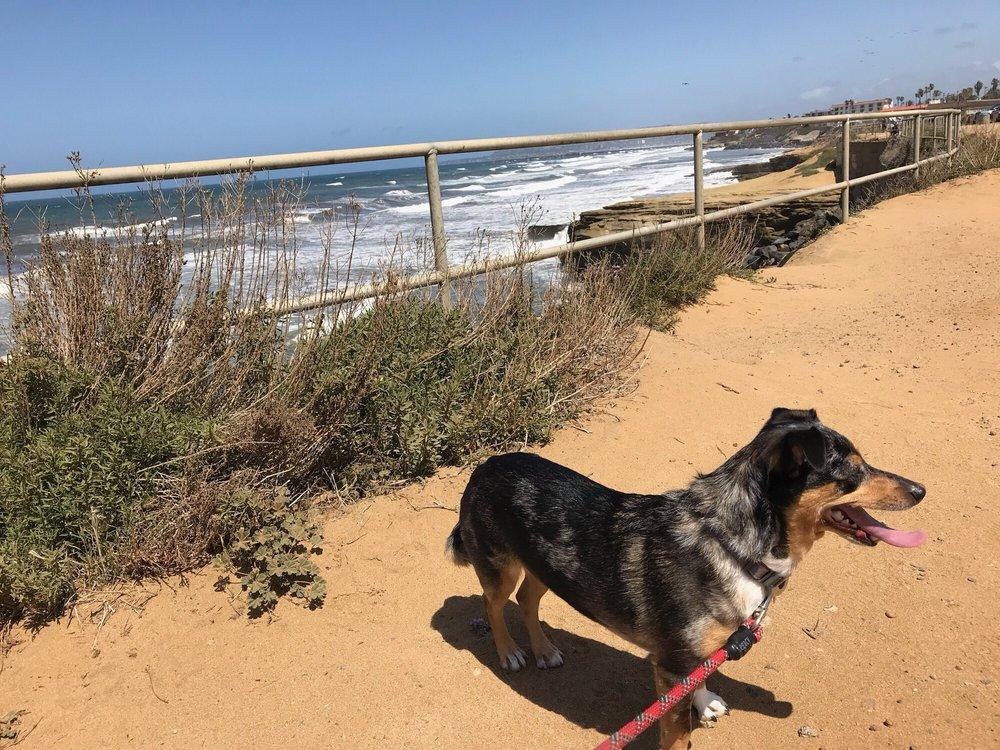San Diego Pet Driver