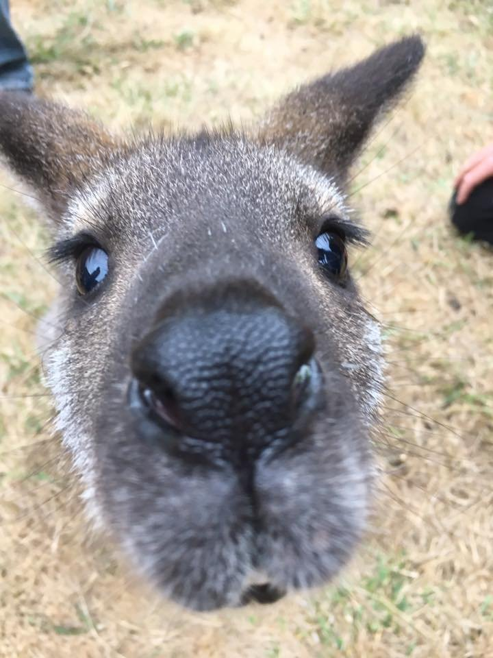 September 8, 2017 Wallaby's nose  They are sooo cute! - Yelp