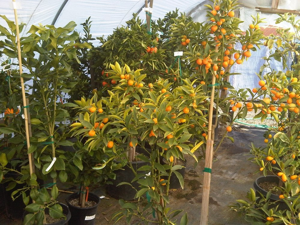 Most trees bear fruit 1st year yelp for Fruit trees for sale