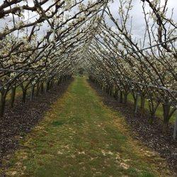 Photo Of Lee Orchard Garden   Plainsboro Township, NJ, United States ...