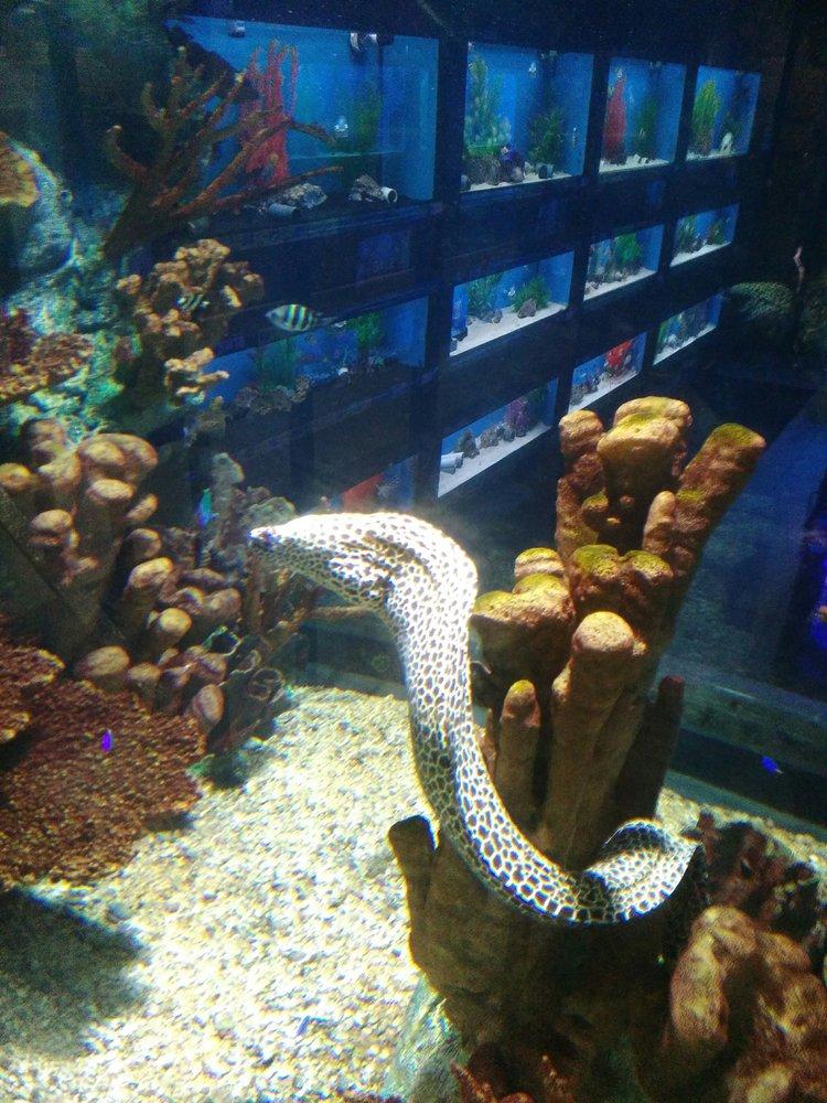 big als aquarium