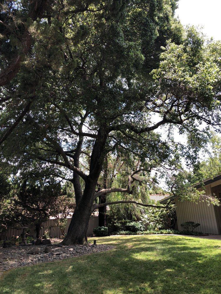 Yuba Sutter Tree Service - Tree Services - Yuba City, CA