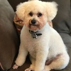 Dogs best friend grooming center 17 reviews pet groomers 1376 photo of dogs best friend grooming center pasadena ca united states great solutioingenieria Gallery