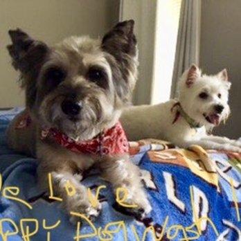 14c670433ee711 Photo of Happy Dog Wash - Orlando, FL, United States. Walter and McDuff