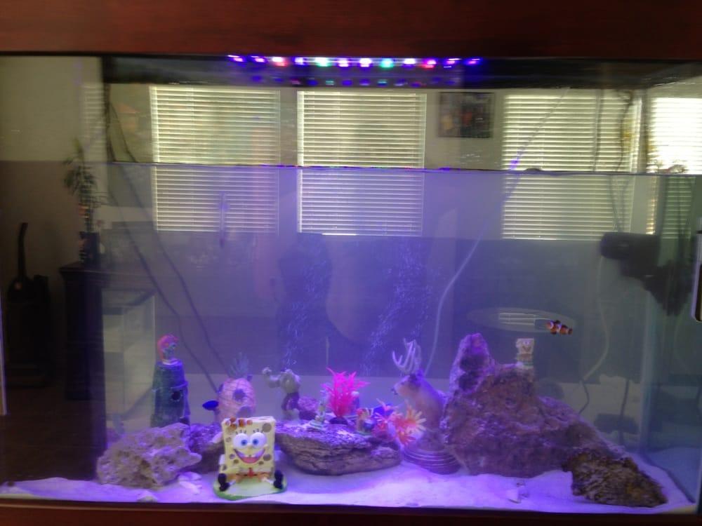 Aquarium Odyssey 16 Reviews Local Fish Stores 73950