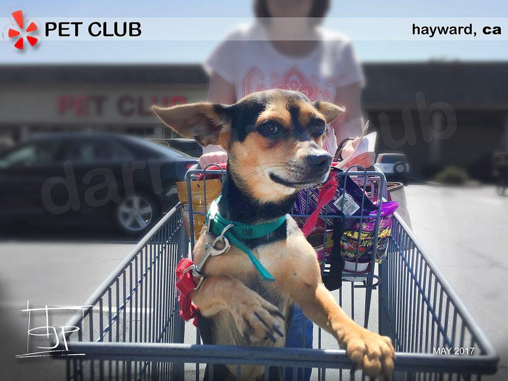 Pet Club: 27451 Hesperian Blvd, Hayward, CA