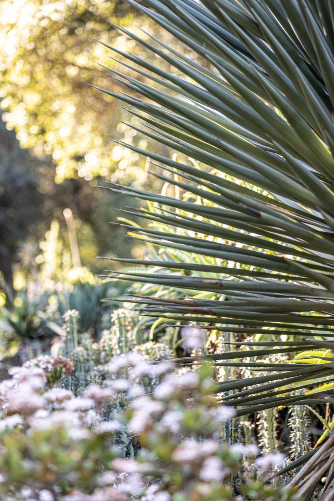 Social Spots from Arizona Garden