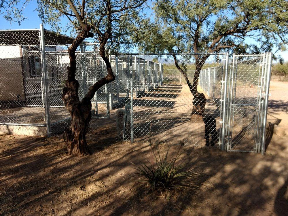 Lisa's Country Grooming: 5911 S Pintek Ln, Hereford, AZ