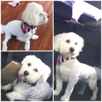 Dog Grooming In Montebello