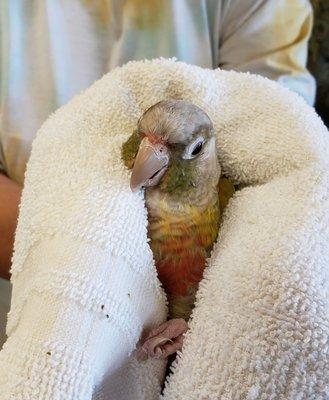 Parrot Connection
