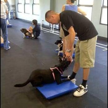 Dog Agility Training Rancho Cucamonga