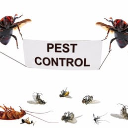 Pest Control Newburyport  Photo of ESP Pest Control - Newburyport, MA, United States