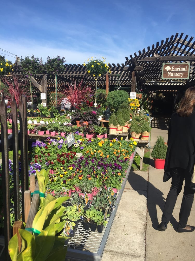 home depot near alameda ca with Encinal Nursery Alameda on 103208 besides Union Station Los Angeles further haywardselfstorage further Livermore Auto Mall 94551 besides Renting And Real Estate 20090212222340aaqm34d.