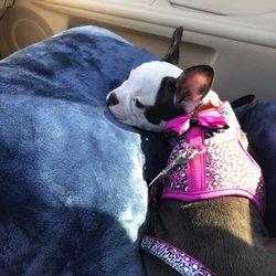 Local Breeders Puppies - 56 Photos & 62 Reviews - Pet