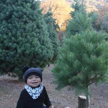 Paradise Christmas Tree Farm Closed 13 Photos 13 Reviews