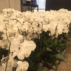 Photo Of South Pacific Orchids   Gilroy, CA, United States