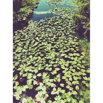Florida Botanical Gardens 209 Photos 38 Reviews Largo Fl United States 12520 Ulmerton