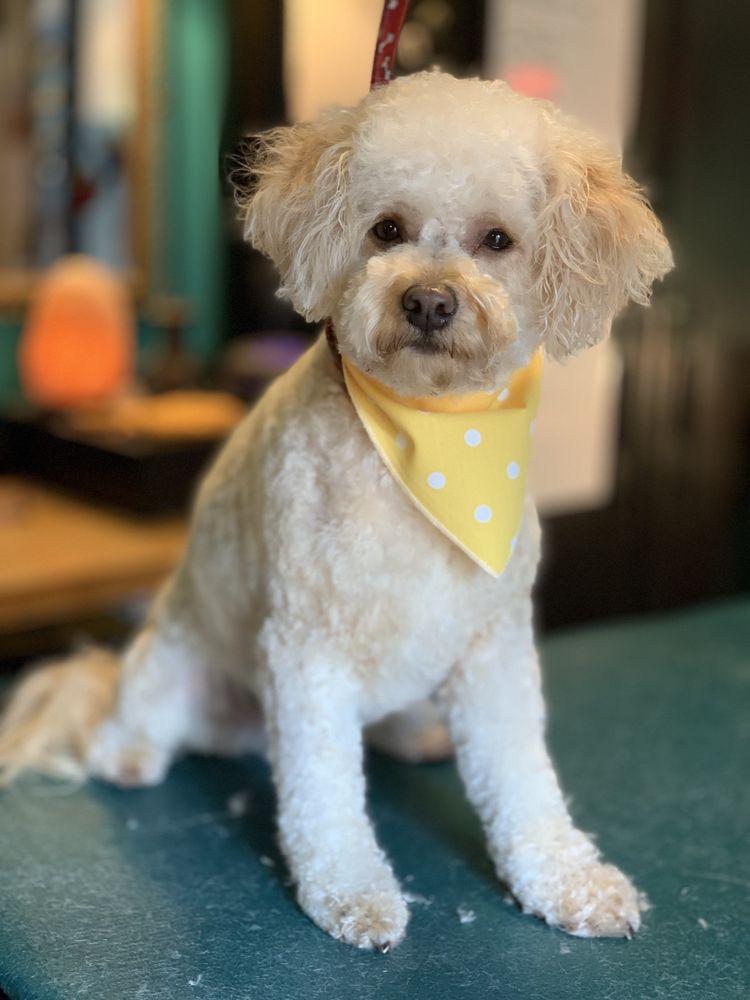 Dava's Doggy Spa: 13610 Lake Rd, Lynnwood, WA