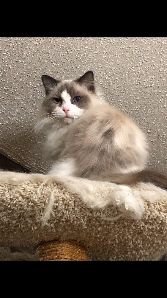 CelesTrail Cats: Ottumwa, IA