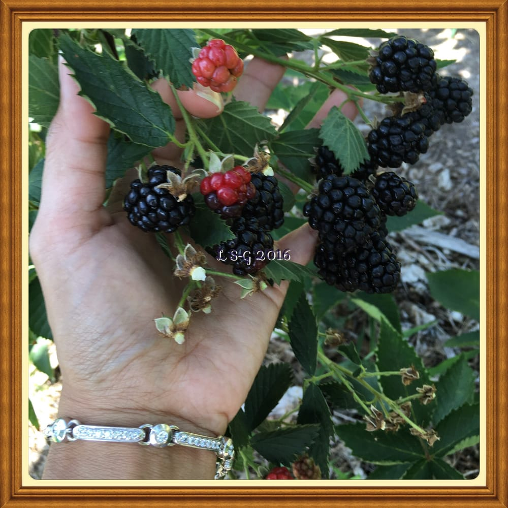 Bailey's Berry Patch: 905 Crawford Rd, Sadler, TX