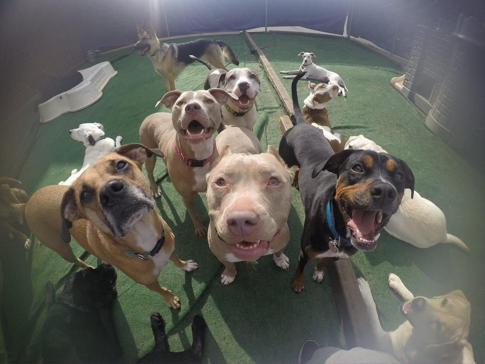 Central Bark Doggy Day Care