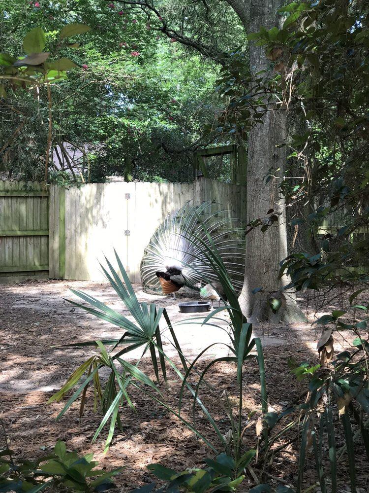 Ellen Trout Zoo: Ellen Trout Park, Lufkin, TX