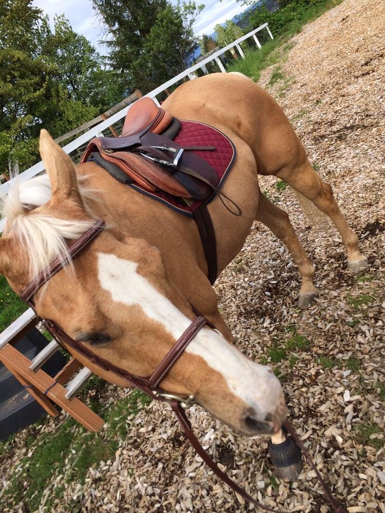 Graystone Stables Amp Equestrian Center Horseback Riding