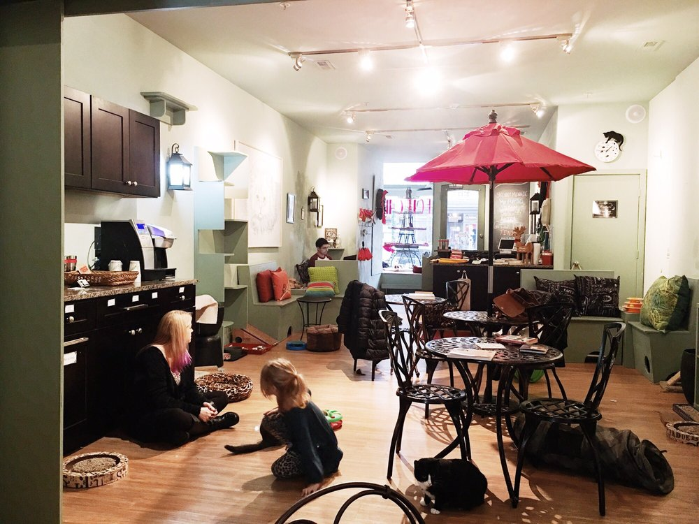 Le Cat Cafe Girard