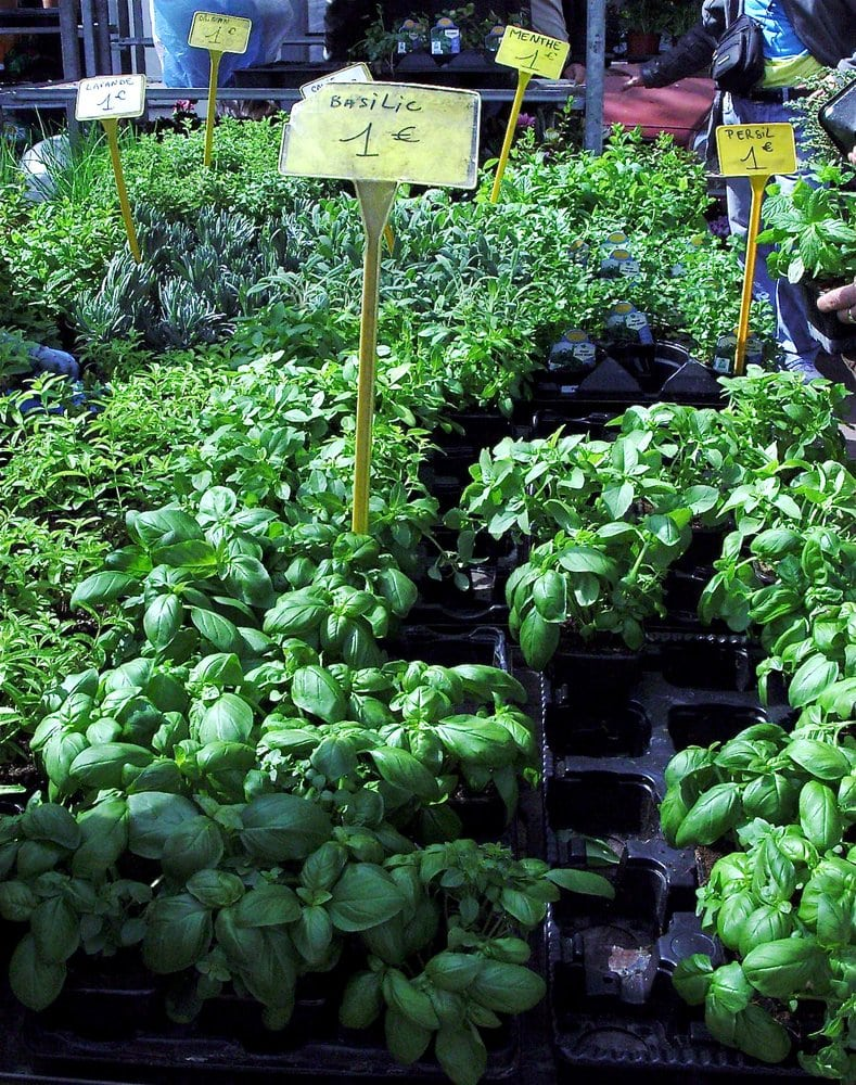 Plantes Aromatiques Yelp