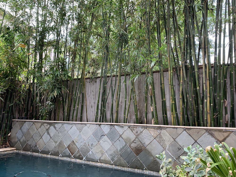 Houston Bamboo Nursery: 10815 Leitz Rd, Houston, TX