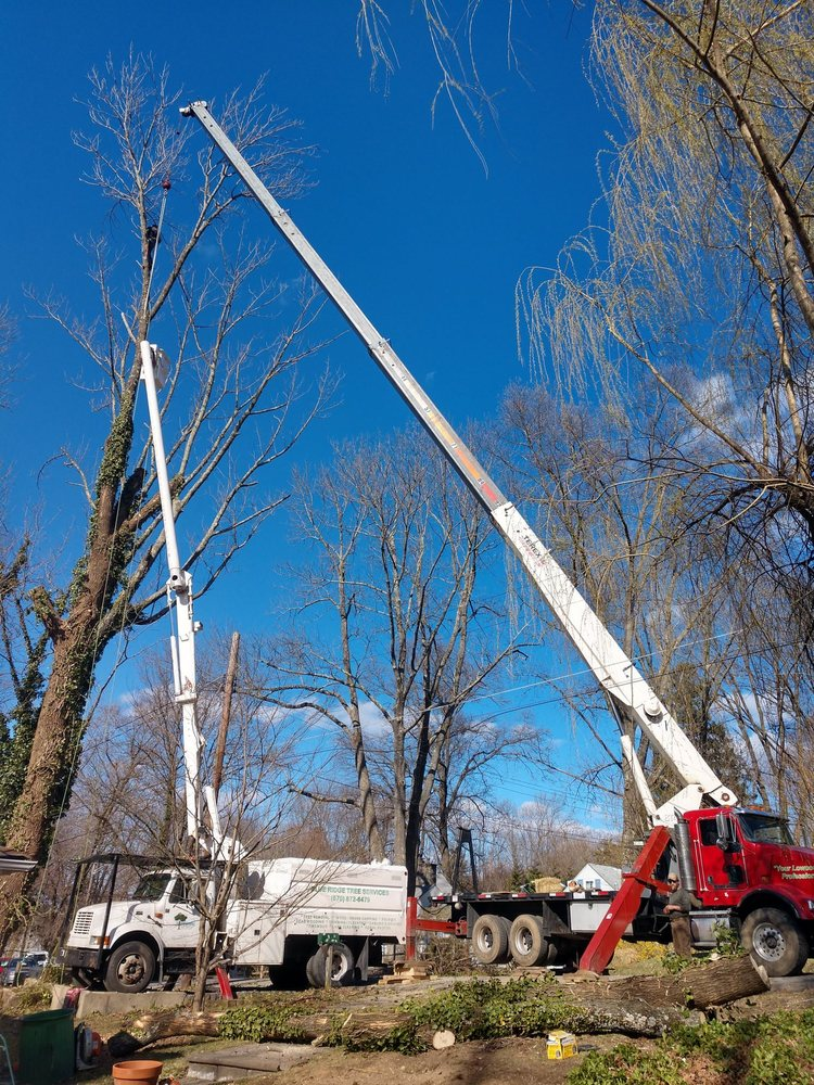 Blue Ridge Tree Services: 1840 Rte 739, Dingmans Ferry, PA