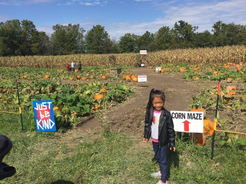 farm corn maze giant picturesque www