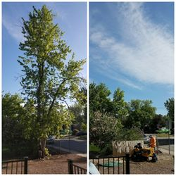 Photo Of Rocky Mountain Tree Care Arvada Co United States Removal
