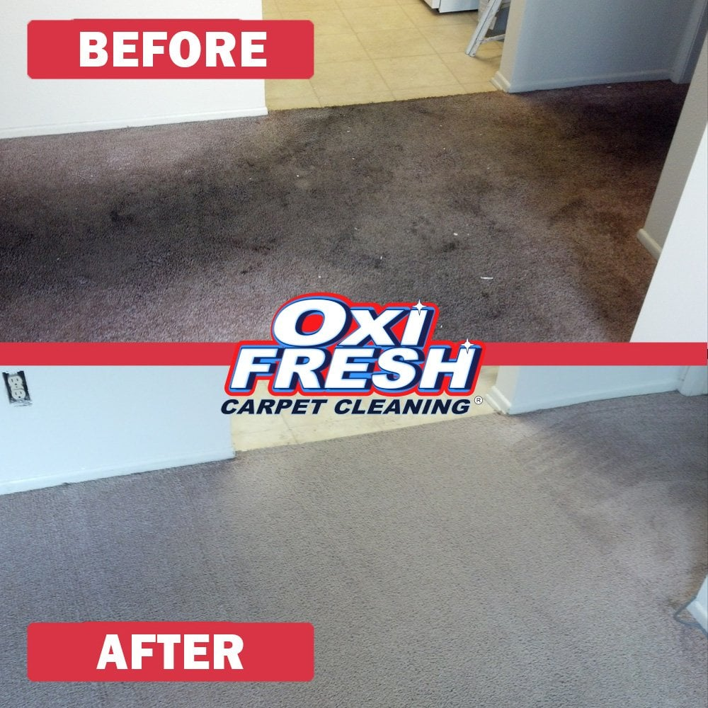 Photos For Oxi Fresh Carpet Cleaning Yelp