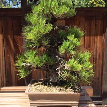 Bonsai Garden At Lake Merritt 161 Photos 31 Reviews Botanical Gardens 650 Bellevue Ave