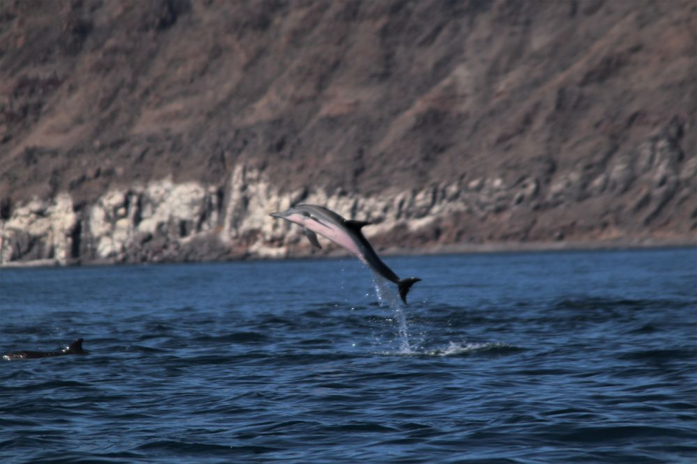 Silver Shark Adventures: Los Angeles, CA