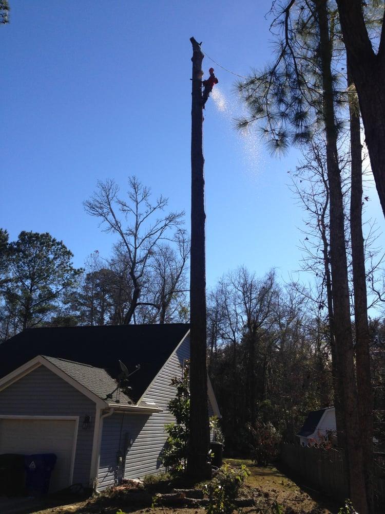 Absolute Trees: 5032 Raptors Reach Ln, Awendaw, SC