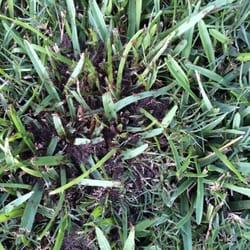 Photo Of Preventive Pest Control Houston Tx United States One Many