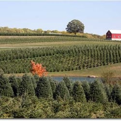 Pine Valley Farms - Christmas Trees - 1150 Fannie Dorsey ...
