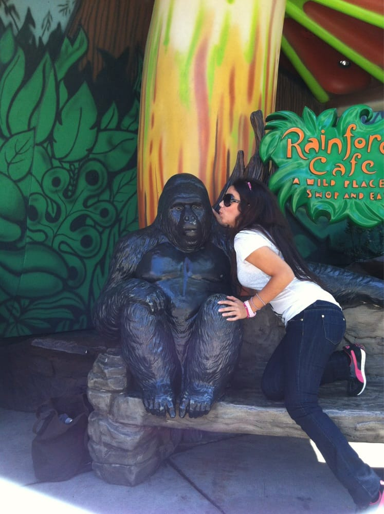 Rainforest Cafe Careers Chicago