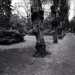 Dagen in Parks
