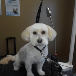 Toes N Tails Get Quote 39 Photos Pet Groomers