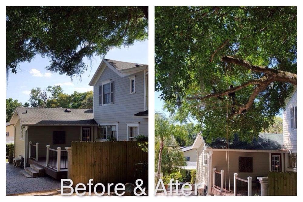 Certified Tree Specialist: Umatilla, FL