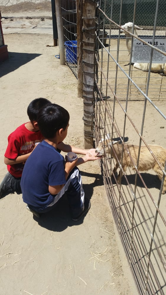 The Boys Loved Feeding The Baby Goat Amp Other Animals Yelp