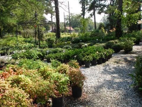 Greenwood Nursery - Nurseries & Gardening - 2422 Hwy 72 W, Greenwood ...