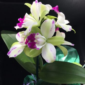 Photo Of Hirniu0027s Wayside Garden Florist   Miami, FL, United States. Orchid