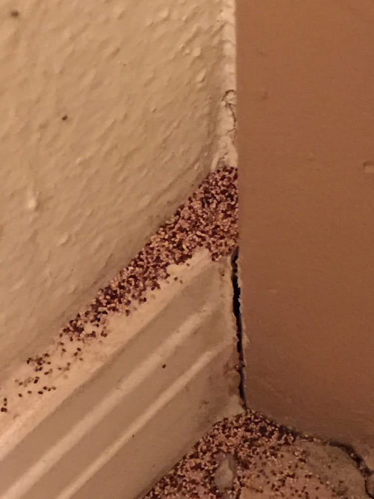 Drywood Termite Droppings Yelp